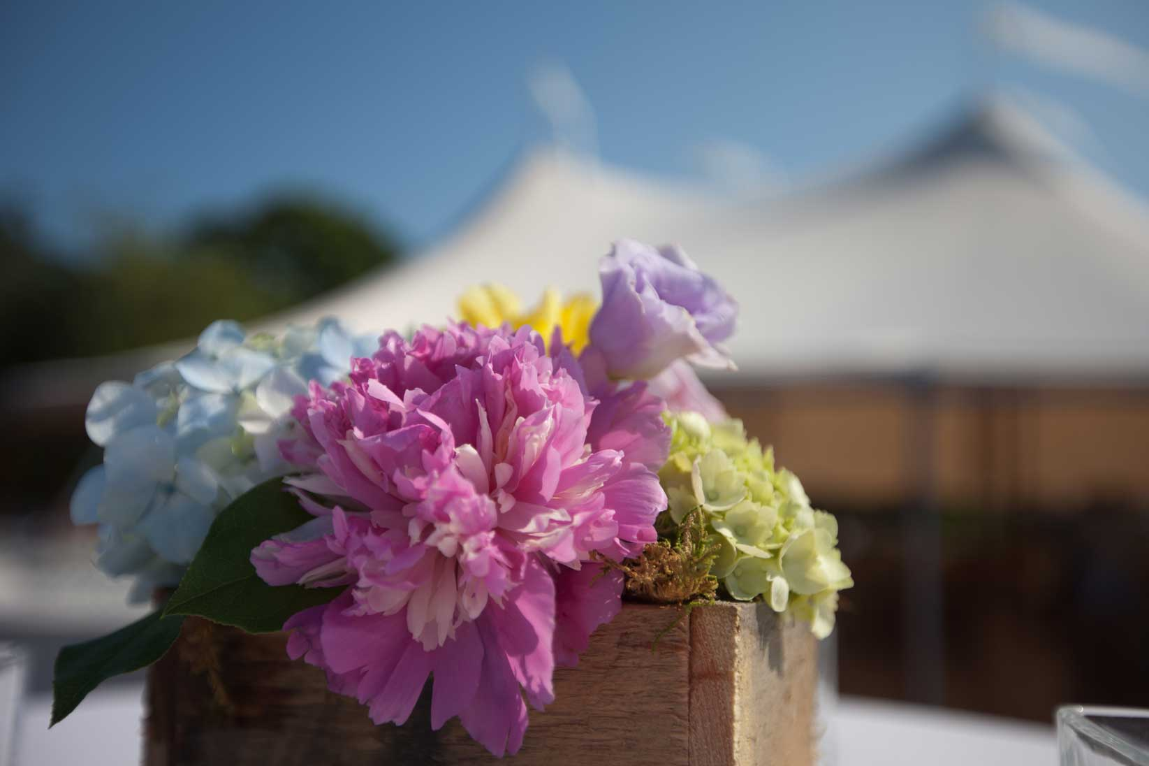 Peonies and Hydrangea adorn the outside tables of a Cape Elizabeth, Maine wedding. www.churchillevents.com
